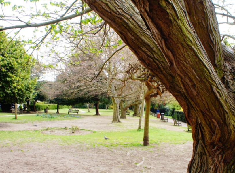 Leigh Library Gardens