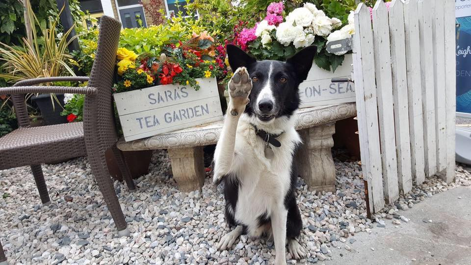 A dog photographed outside Sara's Tea Garden